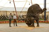 Still Water for Elephants... - Page 5 Th_oct12b