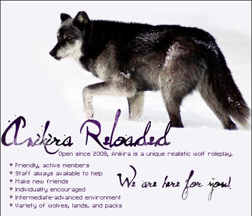 Anikira - advanced realistic wolf rp Adtop