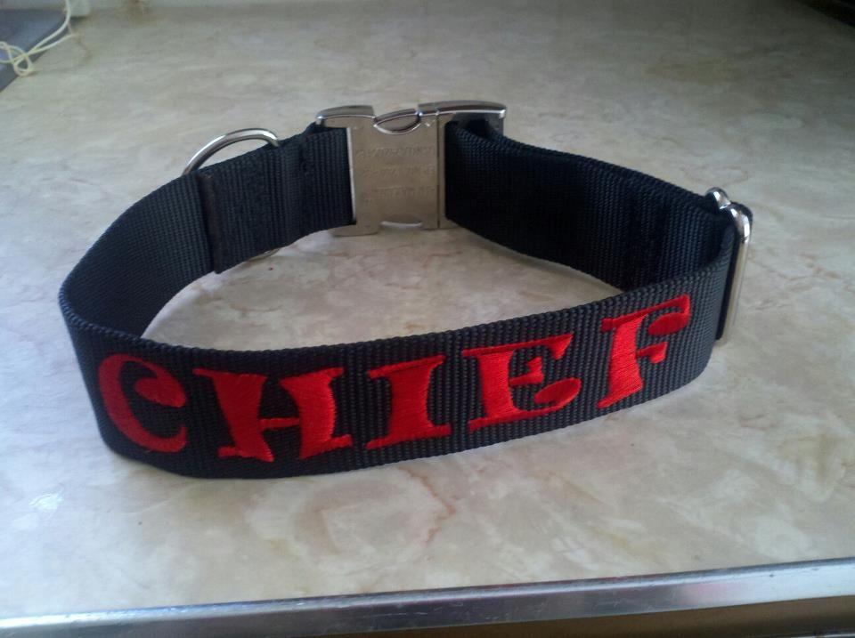 Chiefs New Collar!! Collar