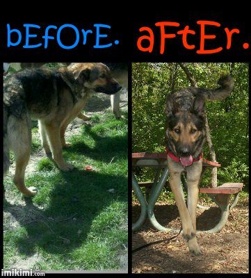 Meet Chief!! (Overload Photos, Non Husky) Beforeandafter_zps0b9e408e