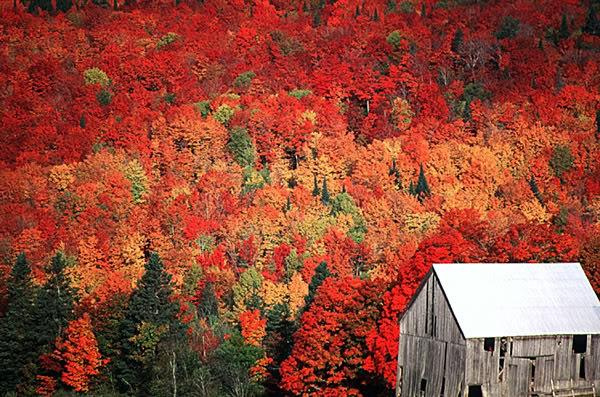 இயற்கை அழகு நிறைந்த காட்சிகள்  - Page 7 Fall_foliage_new_brunswick1