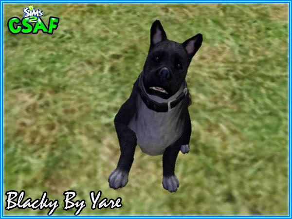 :: Blacky Dog & Oliver Cat by Yare ::  Blacky