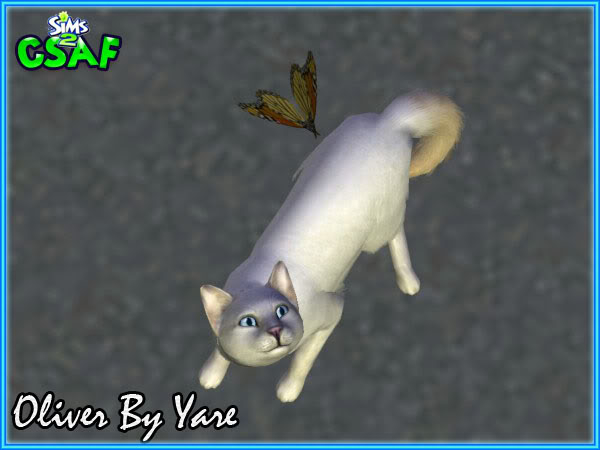 :: Blacky Dog & Oliver Cat by Yare ::  Oliver2