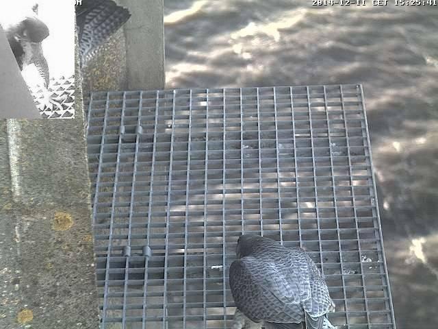 Aalsmeer/Watertoren. Youngster en Sidonia 2014-12-11Aalsmeer1