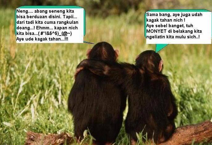 danger!!!!.agagagagaga.............. Monkey