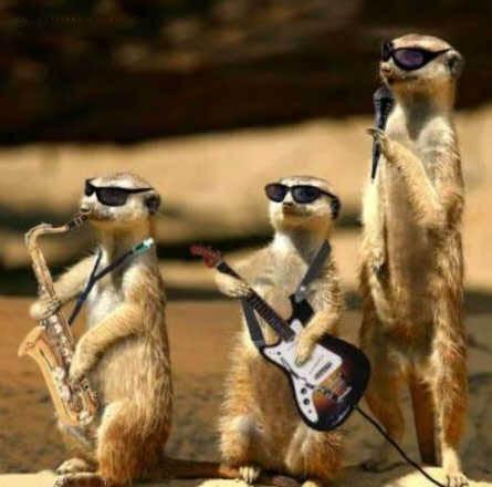 صور حيوانات تموت من الضحك Funny_animals_pictures_119