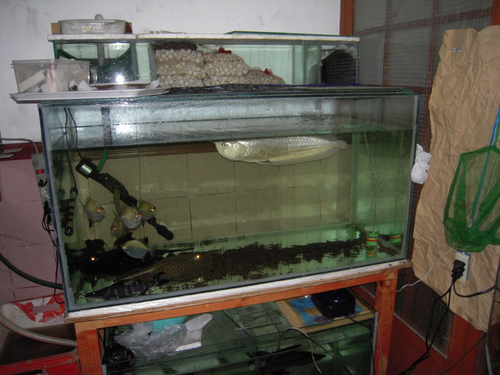 ejemplo de filtracion biologica intensiva .... DSCN0552