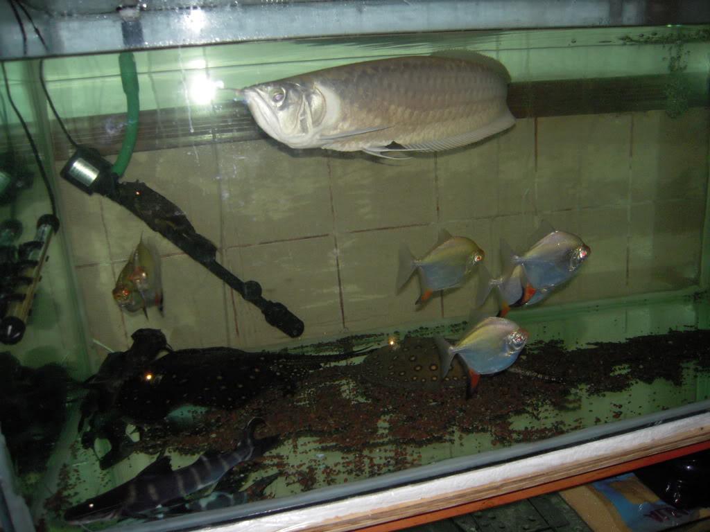 ejemplo de filtracion biologica intensiva .... DSCN0562
