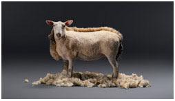 la zamarra Mouton-1