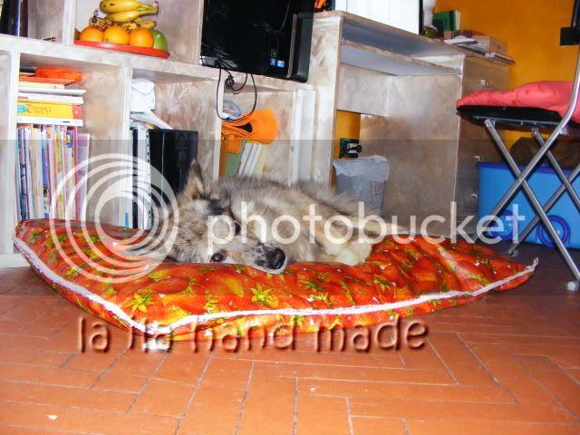 Cuscinone per il Lupino DSCF7578
