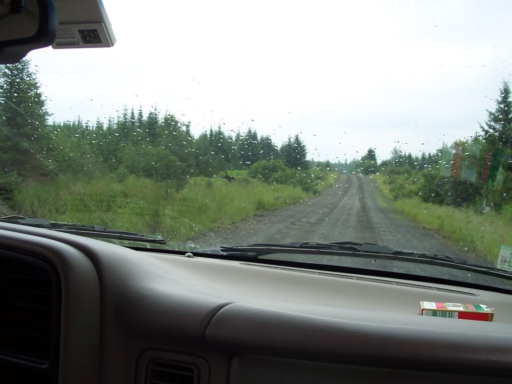 Logging Road photo 100_1732.jpg