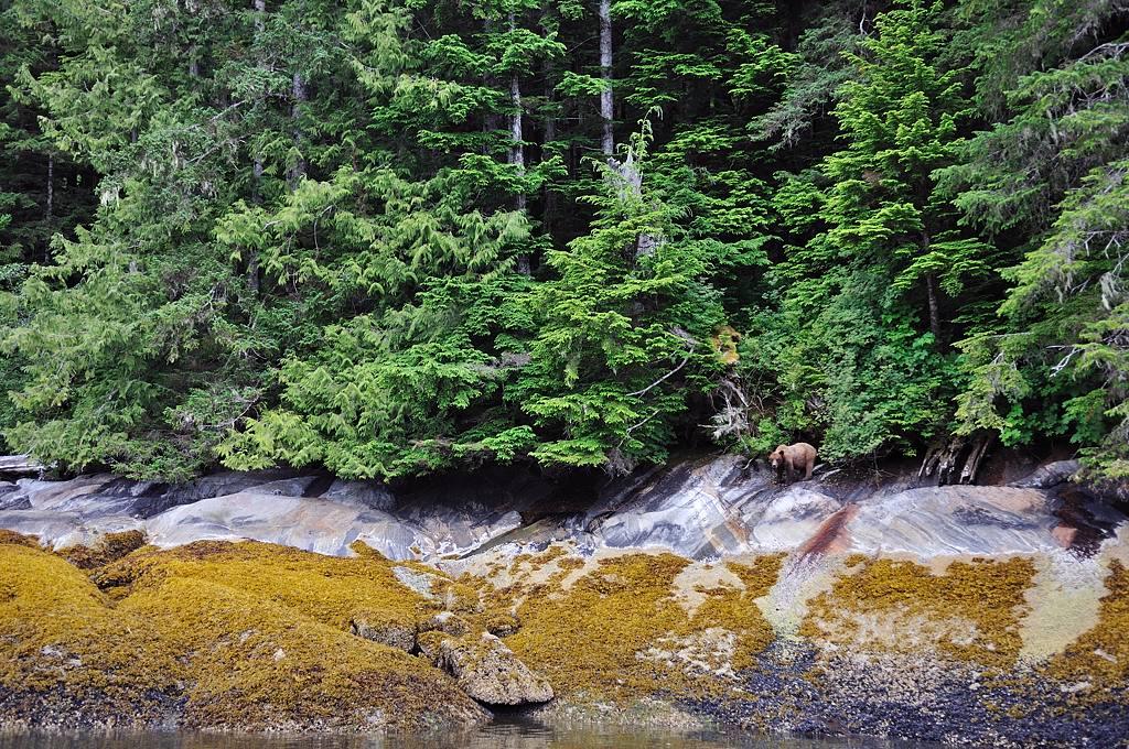 2013 Amérique du Nord:  Partie 1: Niagara Falls - Prince Rupert - Passage Intérieur DSC_0268