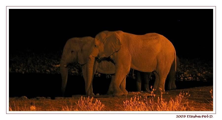 Aventures en Namibie Partie 2 : De Walvis Bay à Etosha 24-18h5556etoshaPF
