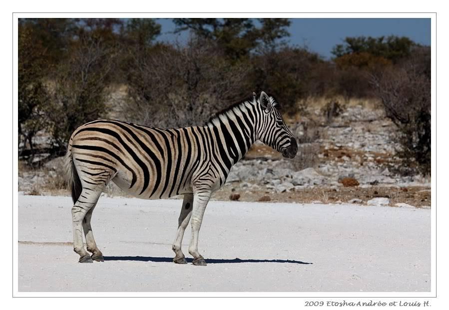 Aventures en Namibie Partie 2 : De Walvis Bay à Etosha DSC_0036pf