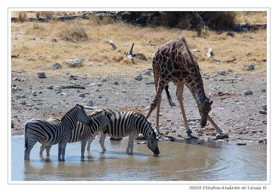 Aventures en Namibie Partie 2 : De Walvis Bay à Etosha DSC_0042pf