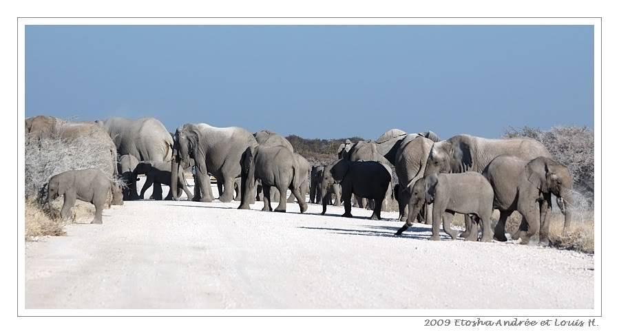 Aventures en Namibie Partie 2 : De Walvis Bay à Etosha DSC_0073pf