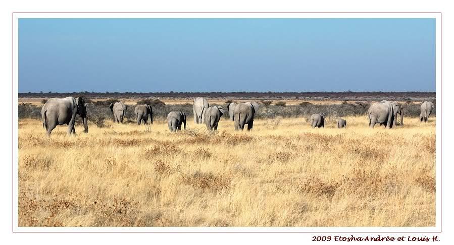 Aventures en Namibie Partie 2 : De Walvis Bay à Etosha DSC_0075pf