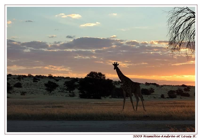 Aventures en Namibie Partie 1: De Windhoek à Sossusvlei DSC_9003