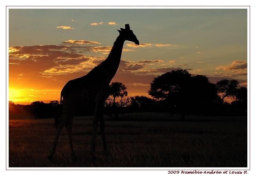 Aventures en Namibie Partie 1: De Windhoek à Sossusvlei DSC_9004