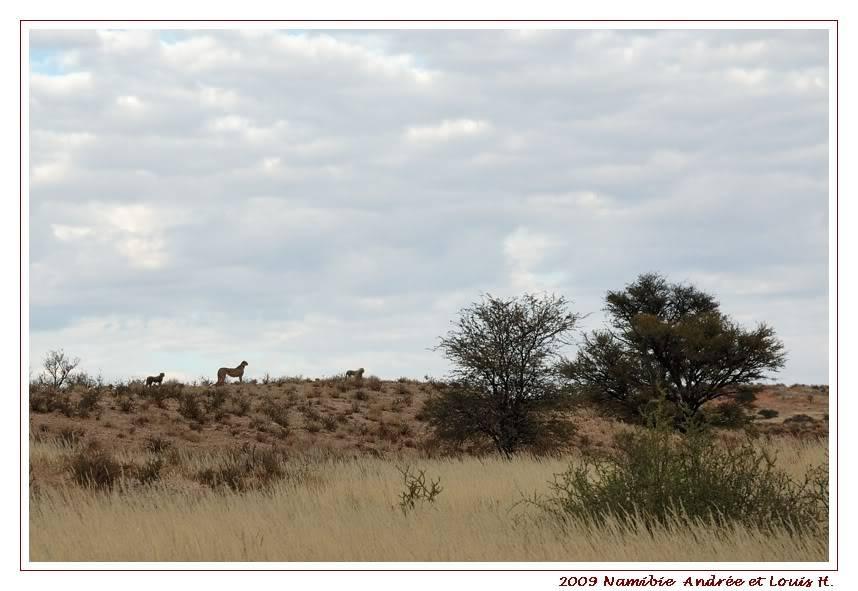 Aventures en Namibie Partie 1: De Windhoek à Sossusvlei DSC_9034