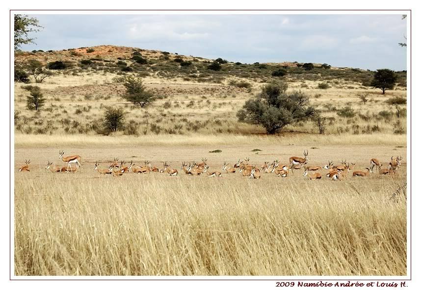 Aventures en Namibie Partie 1: De Windhoek à Sossusvlei DSC_9039