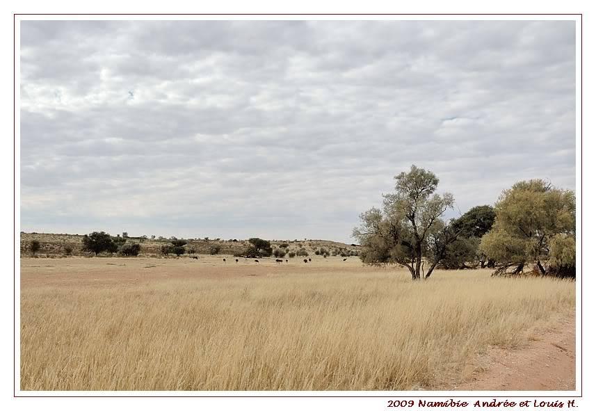 Aventures en Namibie Partie 1: De Windhoek à Sossusvlei DSC_9049