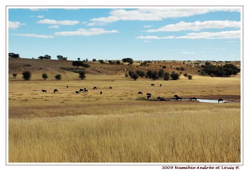 Aventures en Namibie Partie 1: De Windhoek à Sossusvlei DSC_9136