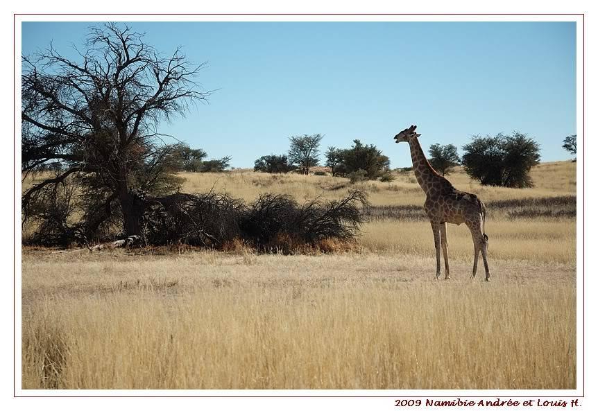 Aventures en Namibie Partie 1: De Windhoek à Sossusvlei DSC_9198