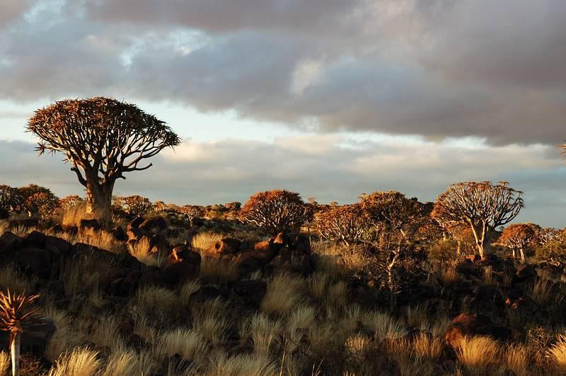 Aventures en Namibie Partie 1: De Windhoek à Sossusvlei DSC_9219