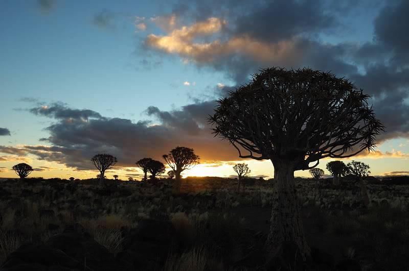 Aventures en Namibie Partie 1: De Windhoek à Sossusvlei DSC_9225