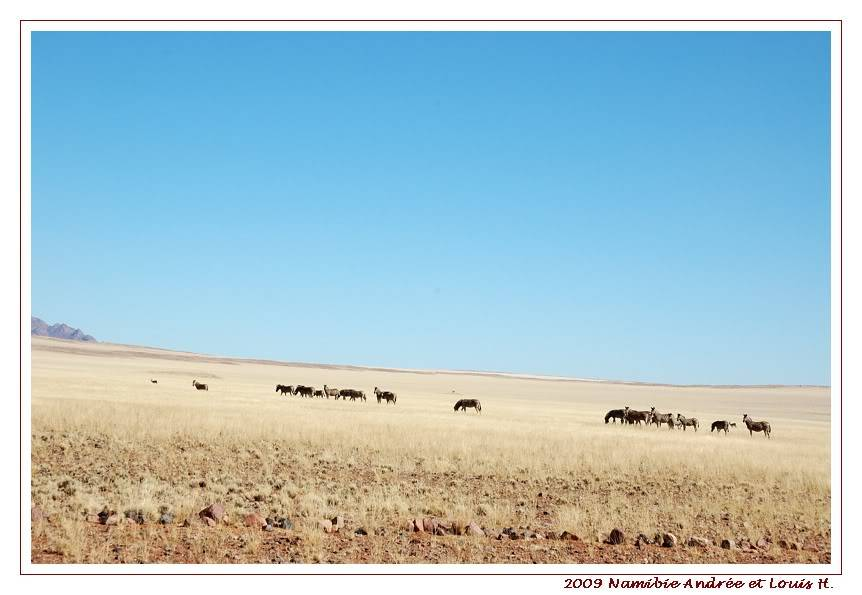 Aventures en Namibie Partie 1: De Windhoek à Sossusvlei DSC_9275
