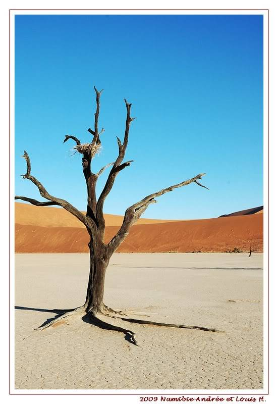 Aventures en Namibie Partie 1: De Windhoek à Sossusvlei DSC_9331