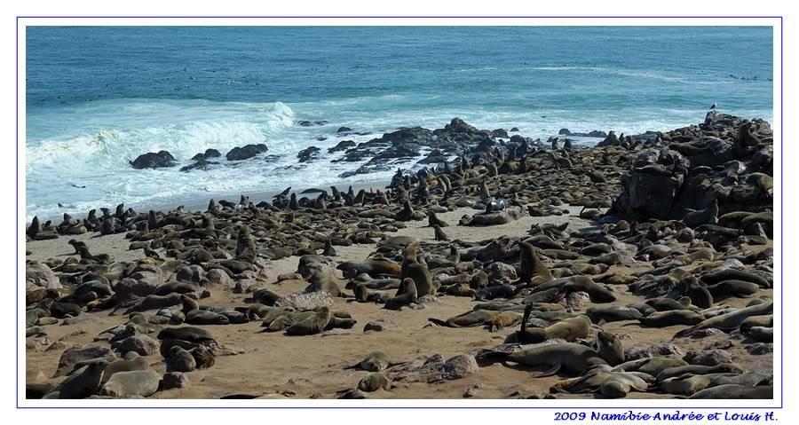 Aventures en Namibie Partie 2 : De Walvis Bay à Etosha DSC_9408