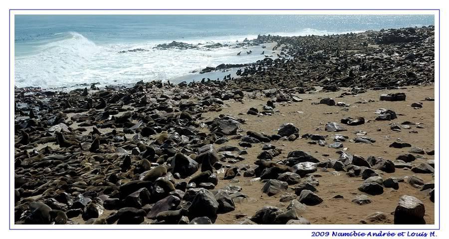 Aventures en Namibie Partie 2 : De Walvis Bay à Etosha DSC_9412