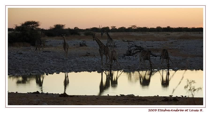 Aventures en Namibie Partie 2 : De Walvis Bay à Etosha DSC_9496PF