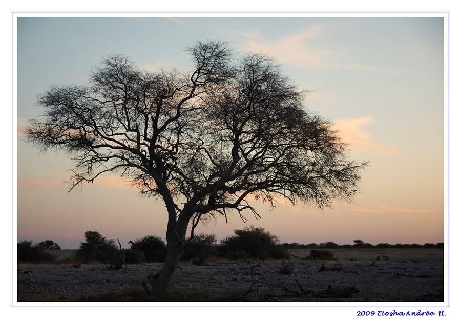 Aventures en Namibie Partie 2 : De Walvis Bay à Etosha DSC_9500PF
