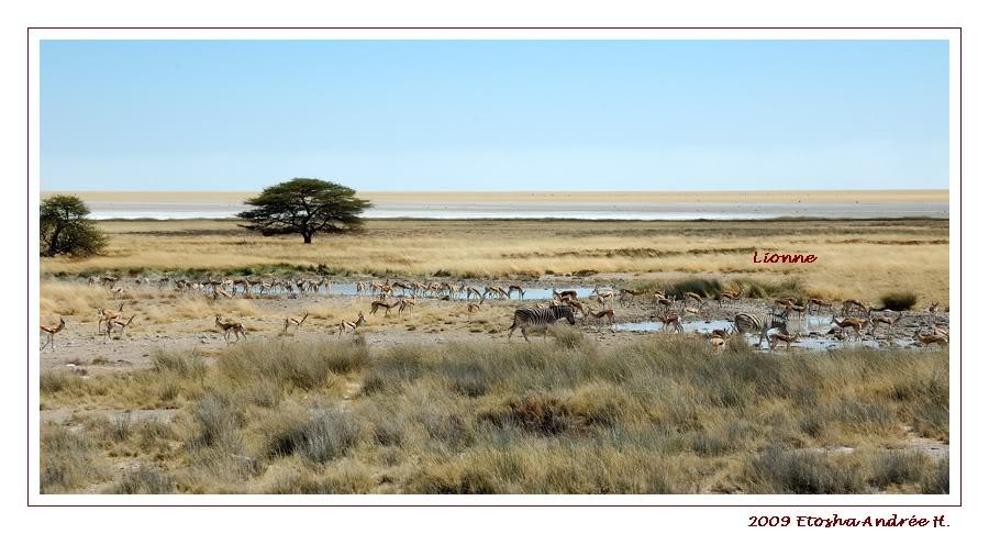 Aventures en Namibie Partie 2 : De Walvis Bay à Etosha DSC_9514PF