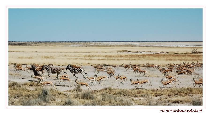 Aventures en Namibie Partie 2 : De Walvis Bay à Etosha DSC_9516PF