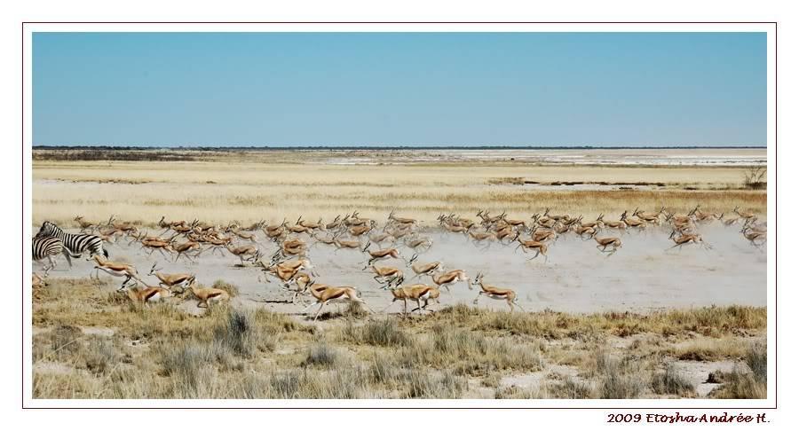 Aventures en Namibie Partie 2 : De Walvis Bay à Etosha DSC_9517PF