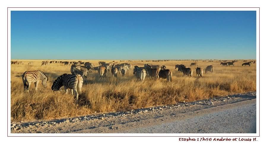Aventures en Namibie Partie 2 : De Walvis Bay à Etosha DSC_9571PF