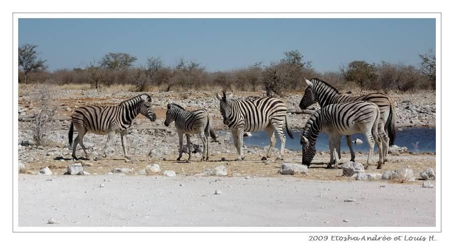 Aventures en Namibie Partie 2 : De Walvis Bay à Etosha DSC_9588pf