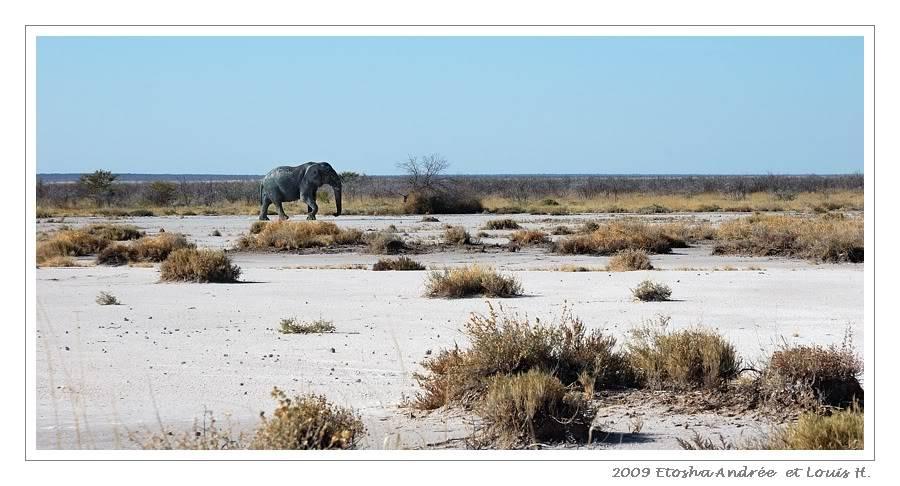 Aventures en Namibie Partie 2 : De Walvis Bay à Etosha DSC_9607pf