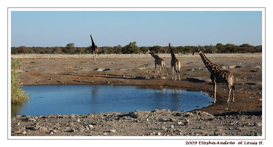 Aventures en Namibie Partie 2 : De Walvis Bay à Etosha DSC_9616pf