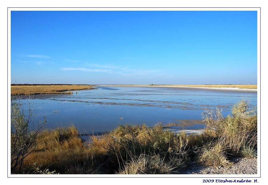 Aventures en Namibie Partie 2 : De Walvis Bay à Etosha DSC_9617pf