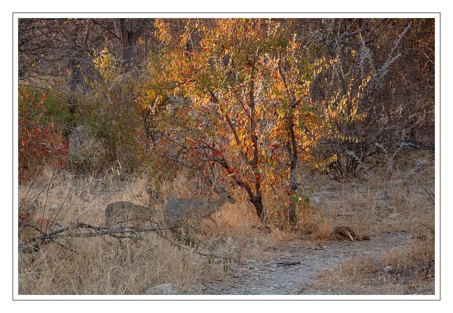 Aventures en Namibie Partie 2 : De Walvis Bay à Etosha DSC_9625PF