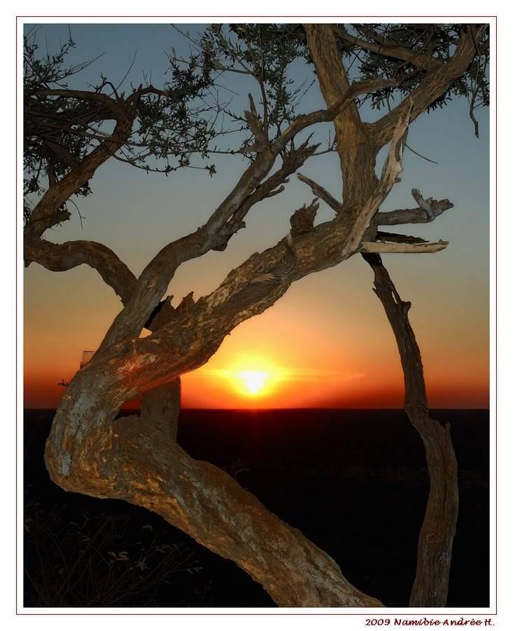 Aventures en Namibie Partie 2 : De Walvis Bay à Etosha DSC_9661PF