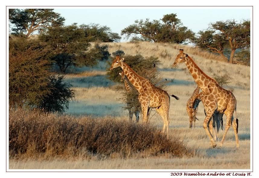 Aventures en Namibie Partie 1: De Windhoek à Sossusvlei DSC_9723