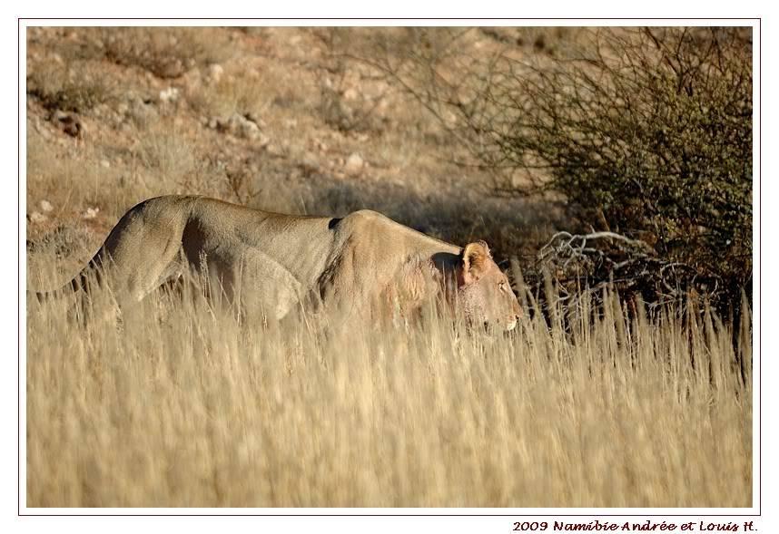 Aventures en Namibie Partie 1: De Windhoek à Sossusvlei DSC_9765