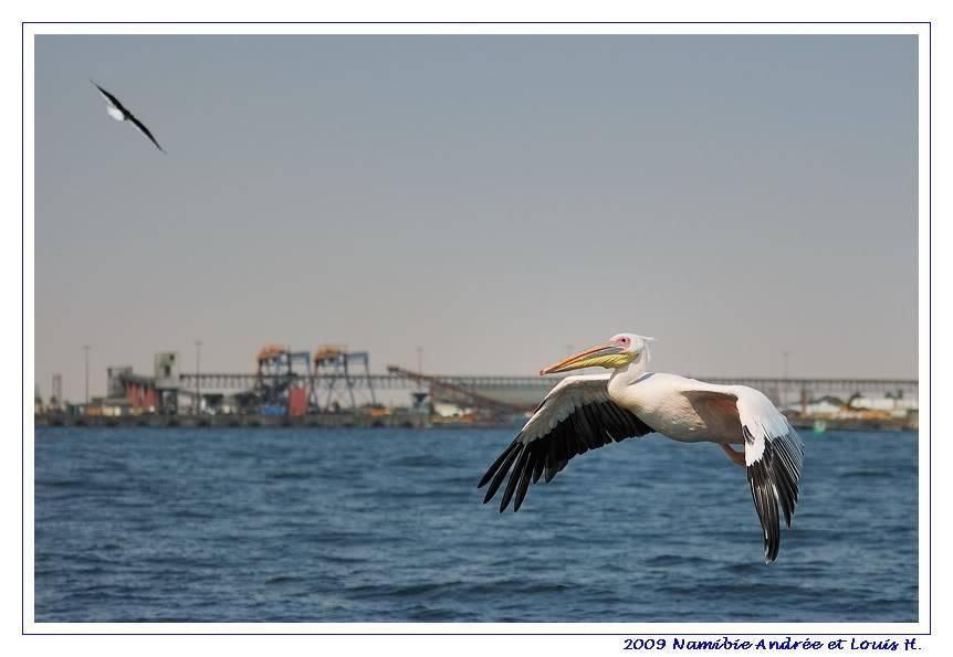 Aventures en Namibie Partie 2 : De Walvis Bay à Etosha DSC_9779