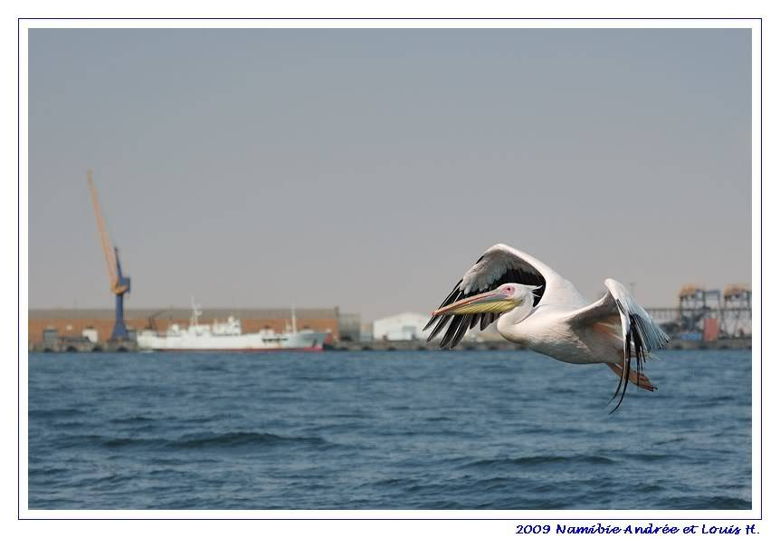 Aventures en Namibie Partie 2 : De Walvis Bay à Etosha DSC_9780